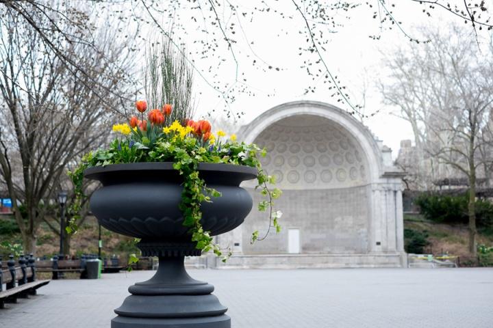 spring in centralpark
