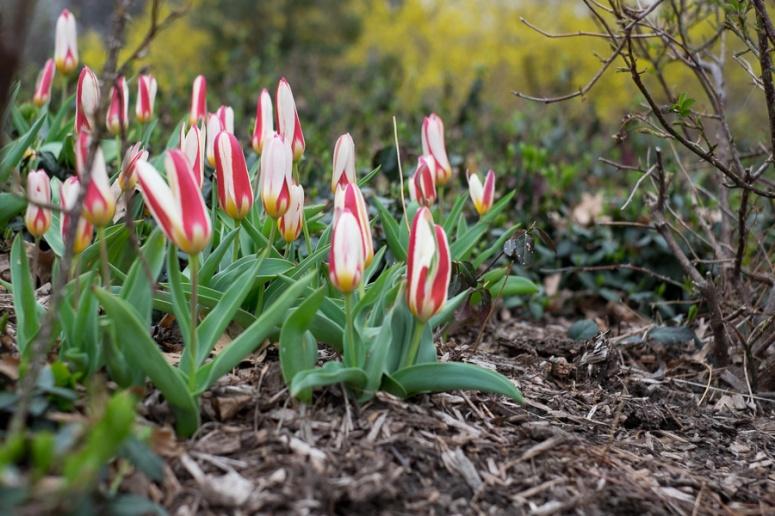 spring in cp-10513