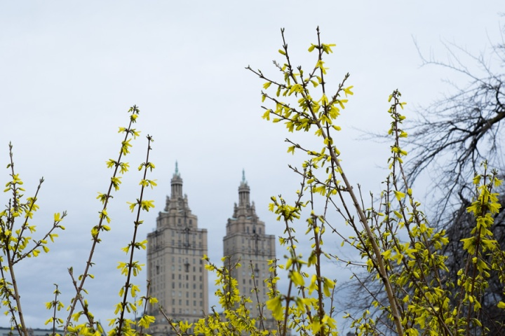 spring in cp-10523