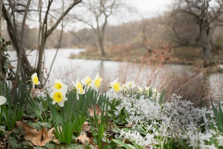 spring in cp-10538