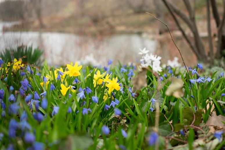 spring in cp-10542