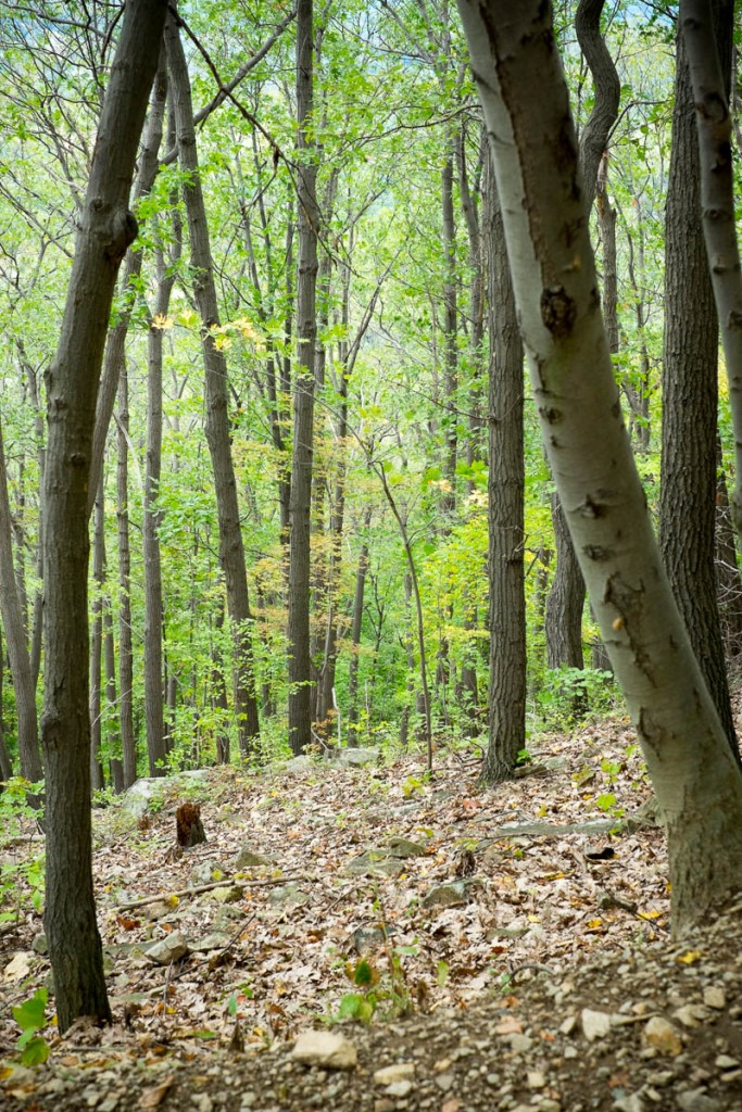 fishkill_ridge_hike-20150914-04
